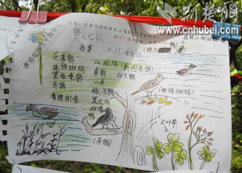参赛小学生们记录观鸟数量和种类,绘画涂鸦自然笔记,用自己的方式逐步
